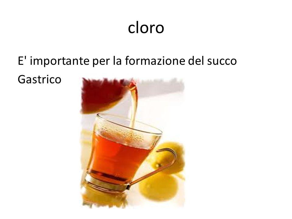 cloro E importante per la formazione del succo Gastrico