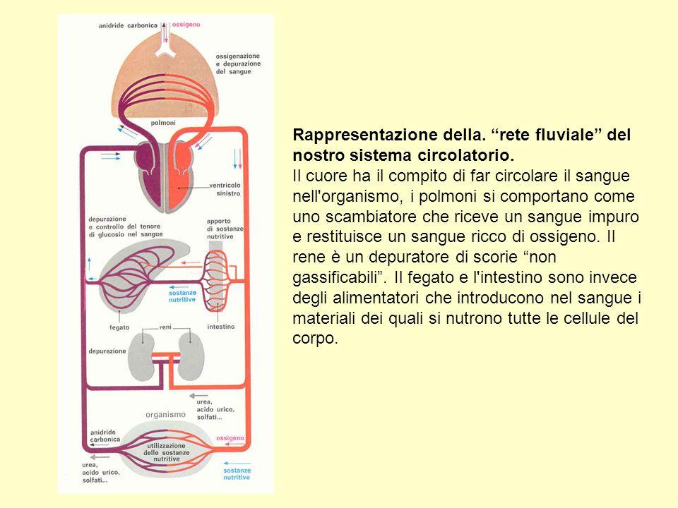 Rappresentazione della. rete fluviale del nostro sistema circolatorio.