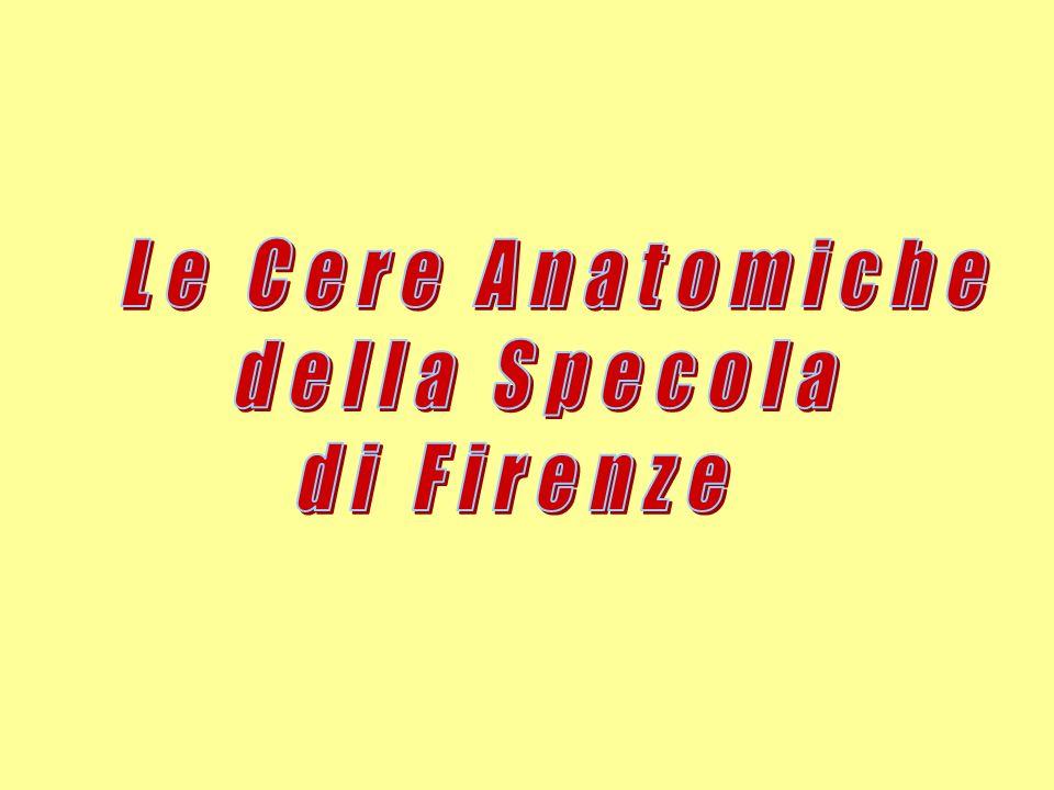 Le Cere Anatomiche della Specola di Firenze