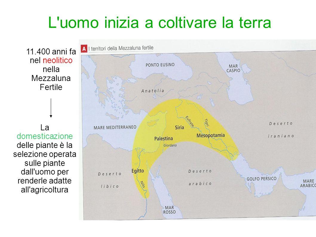 11.400 anni fa nel neolitico nella Mezzaluna Fertile