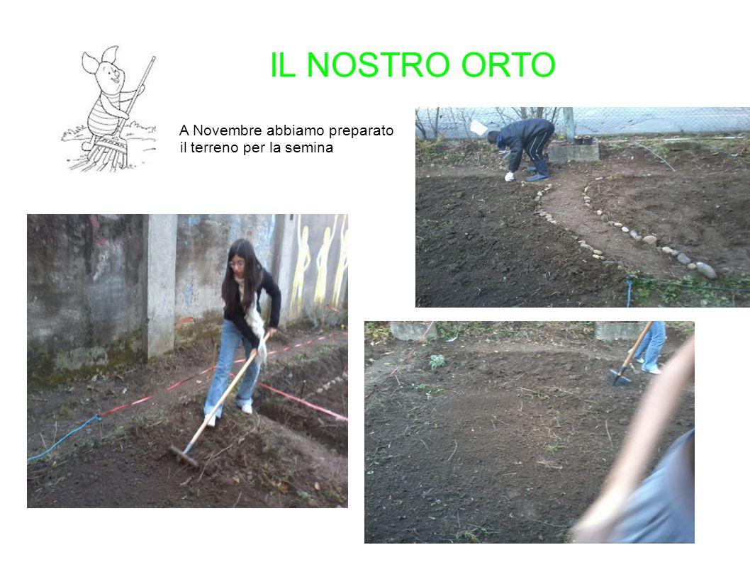 IL NOSTRO ORTO A Novembre abbiamo preparato il terreno per la semina