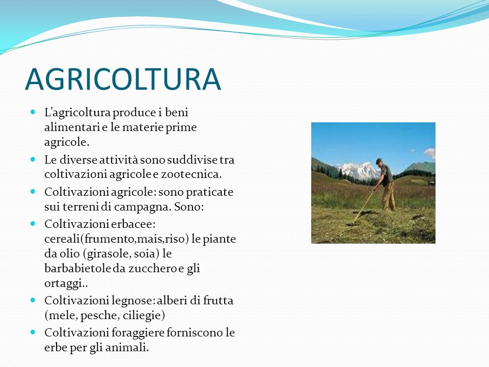 AGRICOLTURA L'agricoltura produce i beni alimentari e le materie prime agricole.