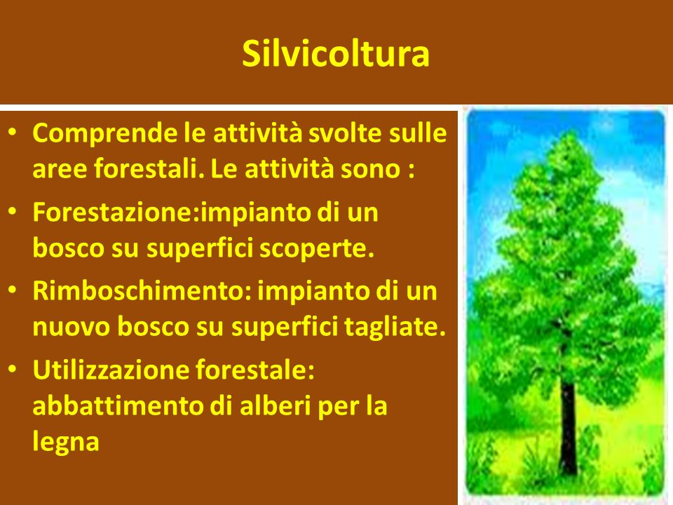 Silvicoltura Comprende le attività svolte sulle aree forestali. Le attività sono : Forestazione:impianto di un bosco su superfici scoperte.