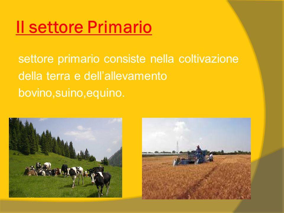 Il settore Primario settore primario consiste nella coltivazione della terra e dell'allevamento bovino,suino,equino.