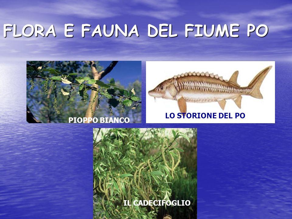 FLORA E FAUNA DEL FIUME PO