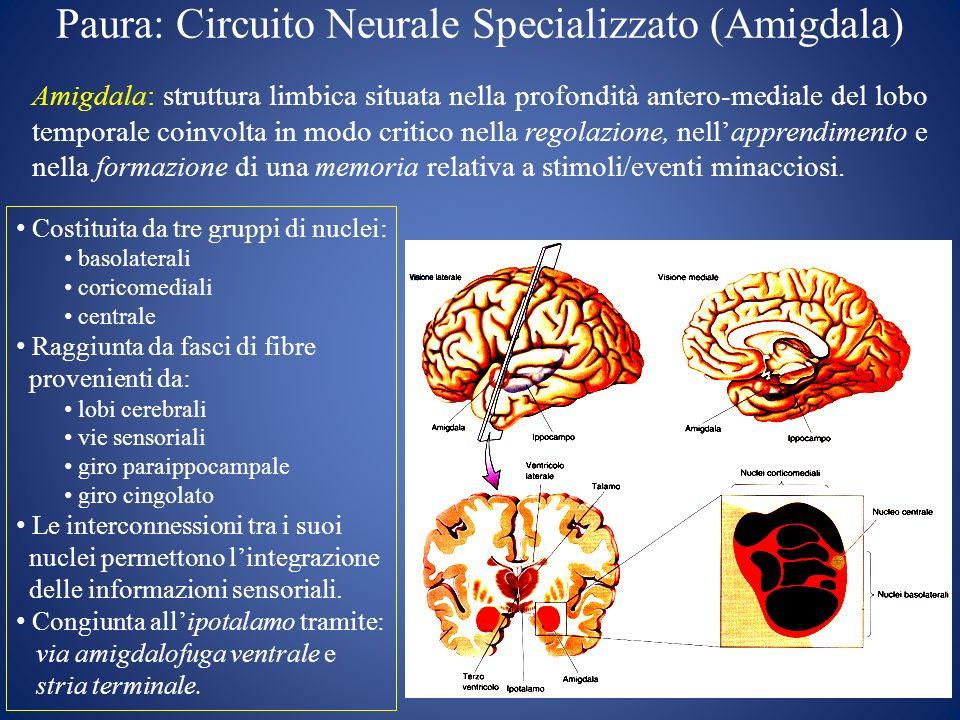 Paura: Circuito Neurale Specializzato (Amigdala)