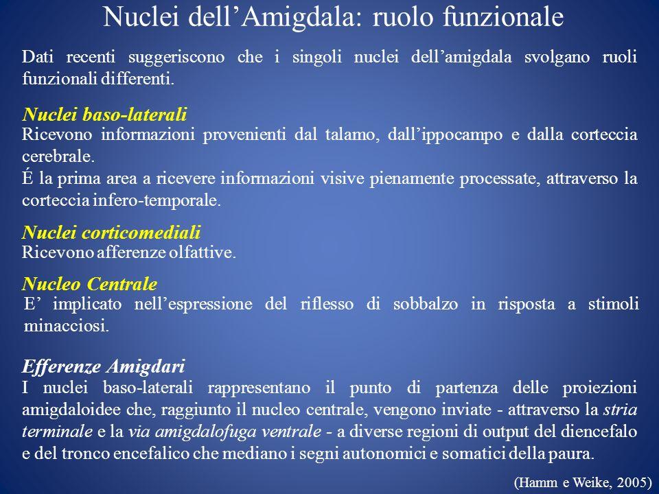 Nuclei dell'Amigdala: ruolo funzionale