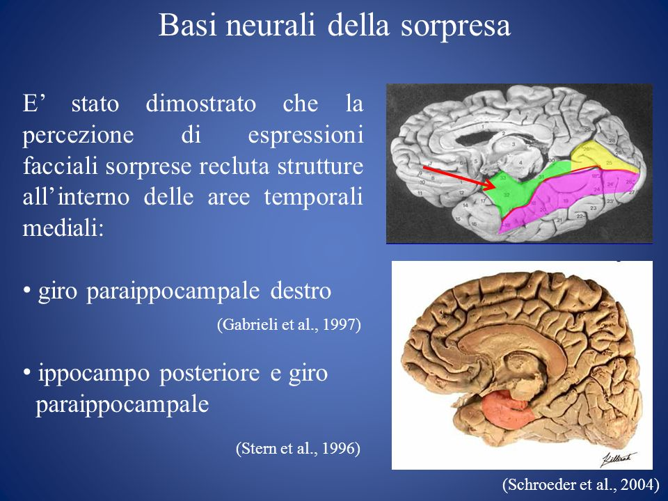(Stern et al., 1996) Basi neurali della sorpresa