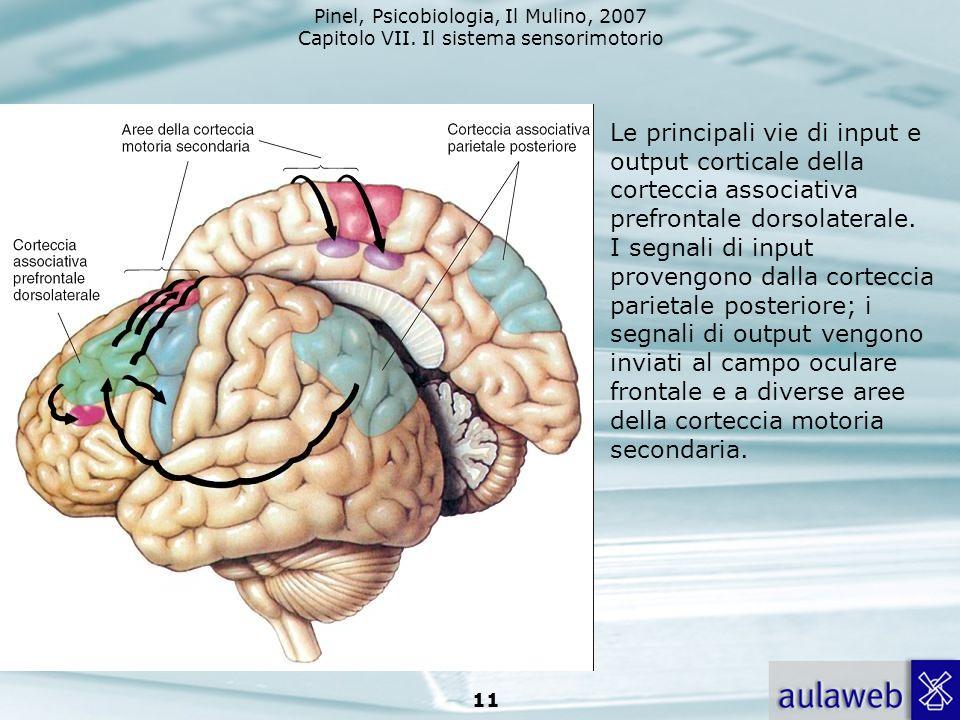 Le principali vie di input e output corticale della corteccia associativa prefrontale dorsolaterale.