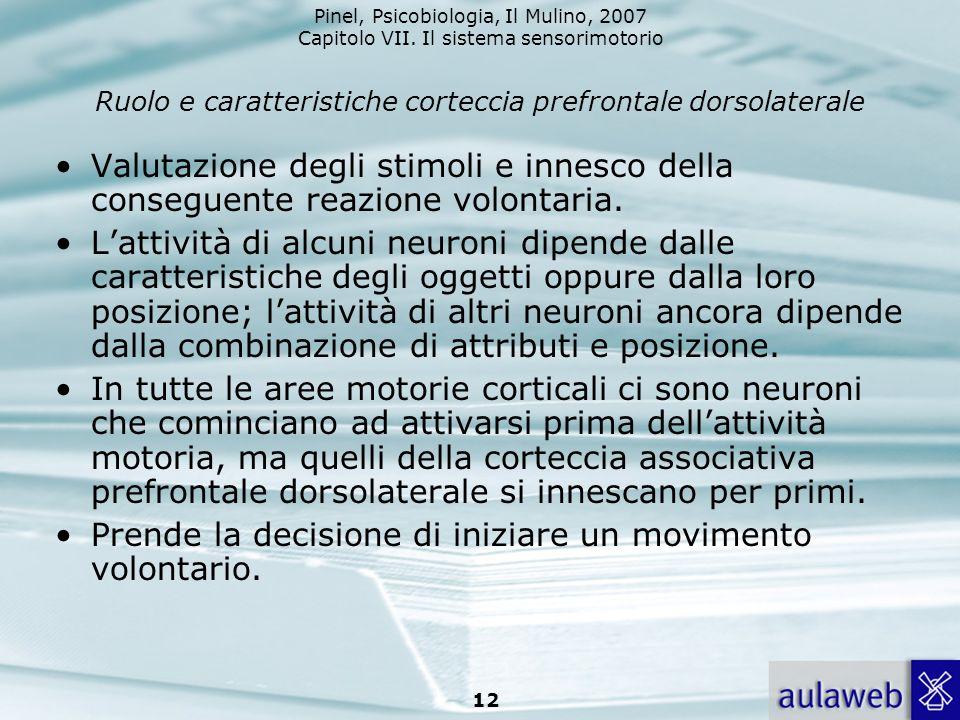 Ruolo e caratteristiche corteccia prefrontale dorsolaterale