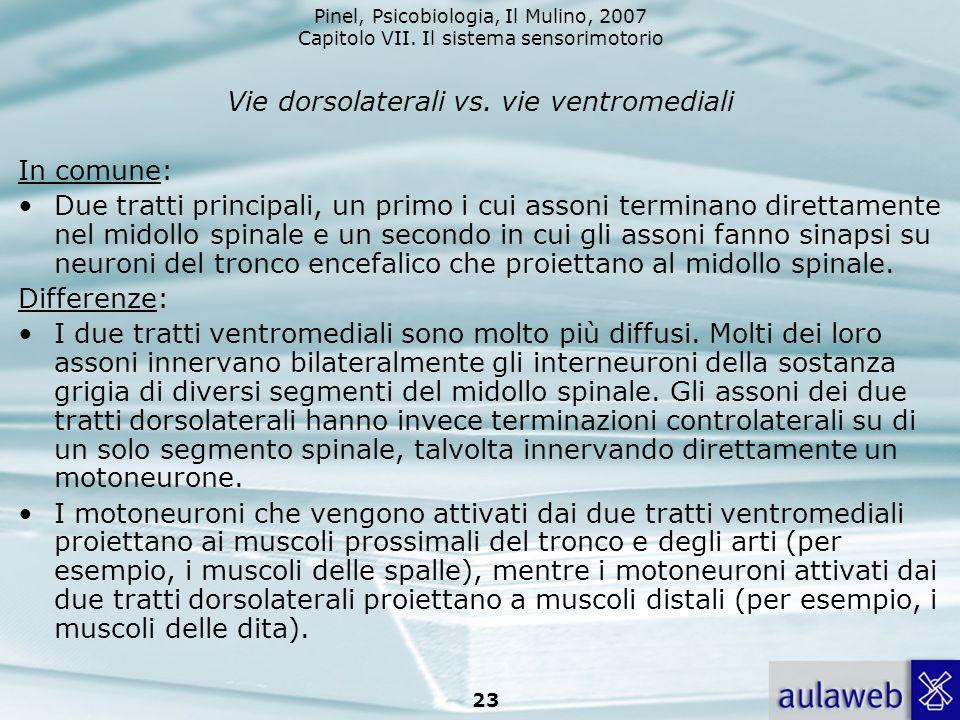 Vie dorsolaterali vs. vie ventromediali
