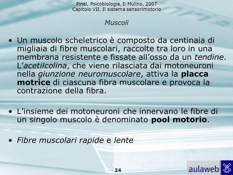 Fibre muscolari rapide e lente