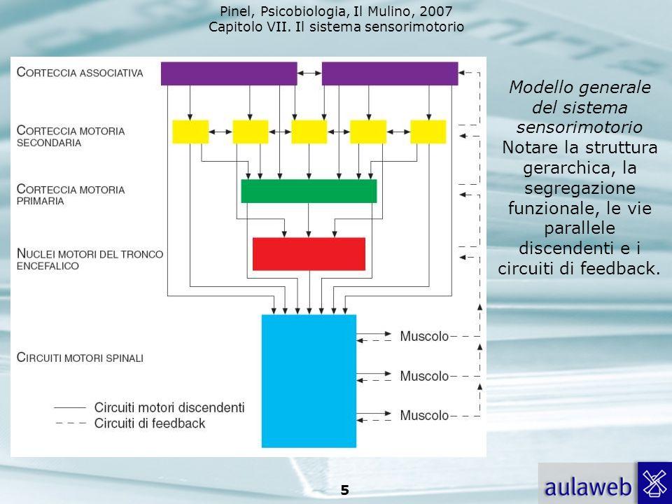 Modello generale del sistema sensorimotorio Notare la struttura gerarchica, la segregazione funzionale, le vie parallele discendenti e i circuiti di feedback.