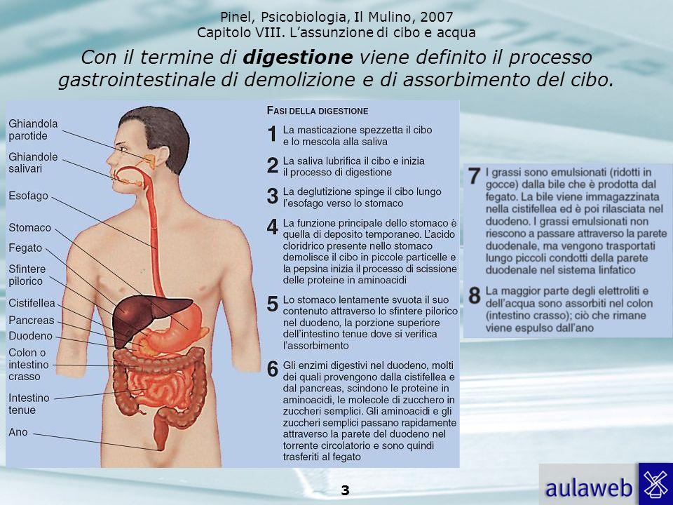 Con il termine di digestione viene definito il processo gastrointestinale di demolizione e di assorbimento del cibo.