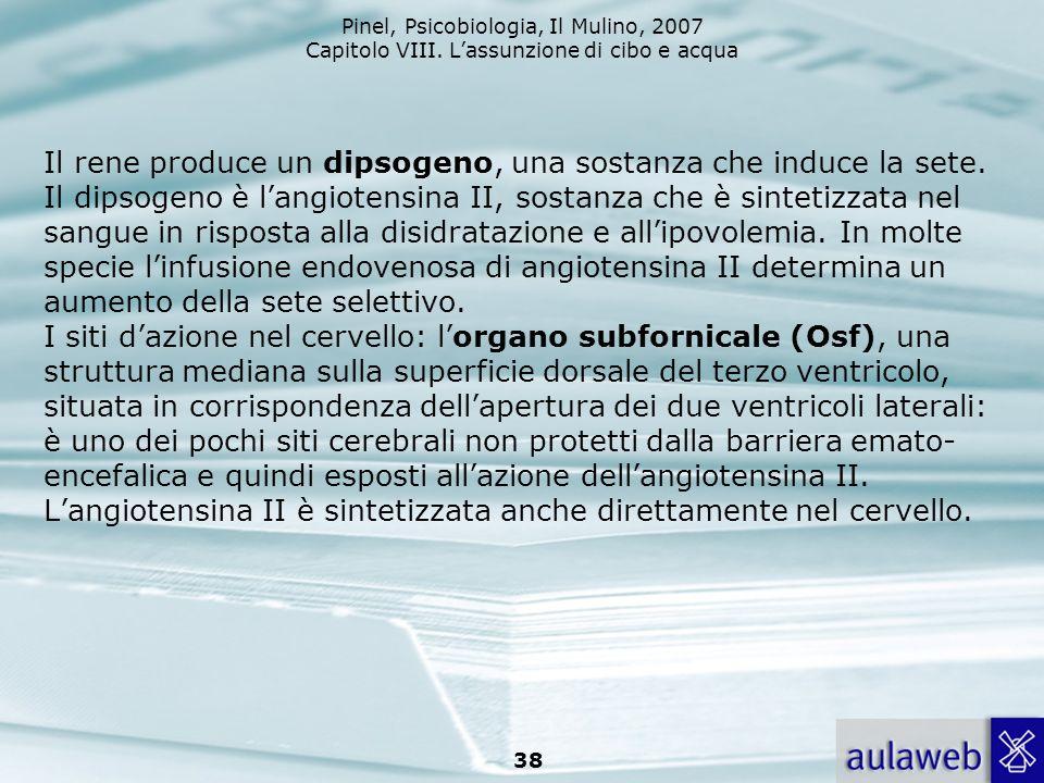 Il rene produce un dipsogeno, una sostanza che induce la sete