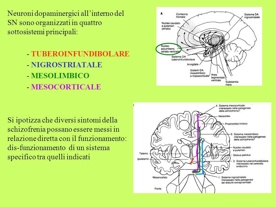 Neuroni dopaminergici all'interno del SN sono organizzati in quattro sottosistemi principali:
