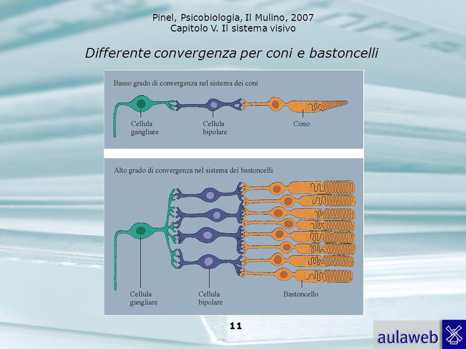 Differente convergenza per coni e bastoncelli
