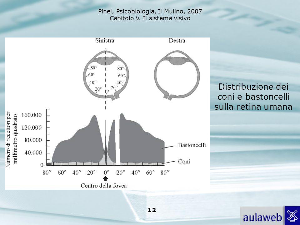 Distribuzione dei coni e bastoncelli sulla retina umana