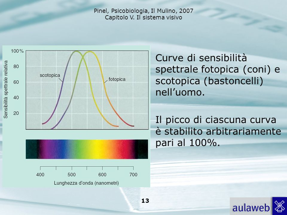 Curve di sensibilità spettrale fotopica (coni) e scotopica (bastoncelli) nell'uomo.
