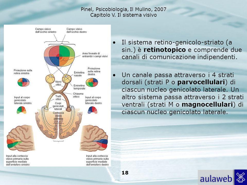Il sistema retino-genicolo-striato (a sin