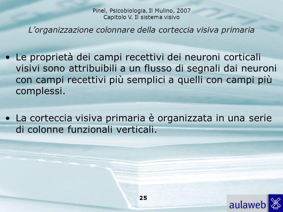 L'organizzazione colonnare della corteccia visiva primaria