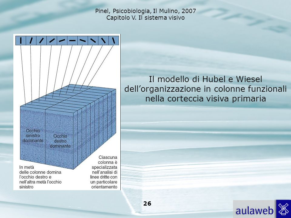 Il modello di Hubel e Wiesel dell'organizzazione in colonne funzionali nella corteccia visiva primaria