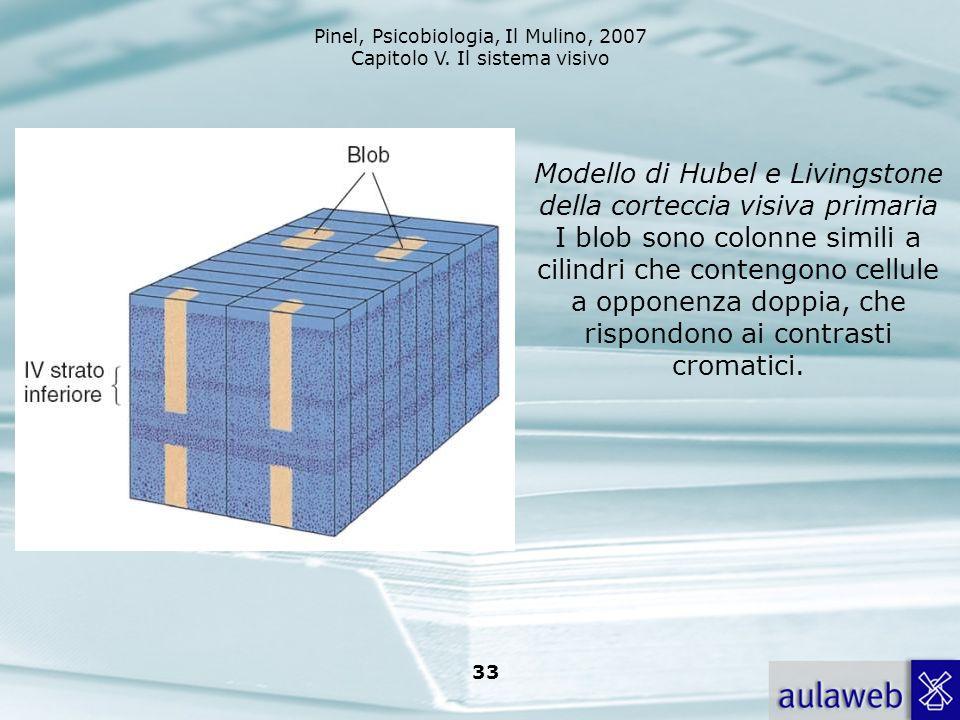Modello di Hubel e Livingstone della corteccia visiva primaria I blob sono colonne simili a cilindri che contengono cellule a opponenza doppia, che rispondono ai contrasti cromatici.