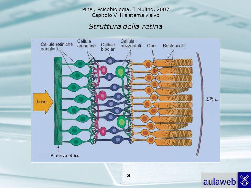 Struttura della retina