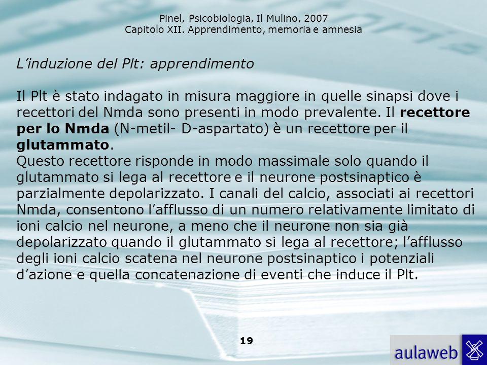 L'induzione del Plt: apprendimento Il Plt è stato indagato in misura maggiore in quelle sinapsi dove i recettori del Nmda sono presenti in modo prevalente.
