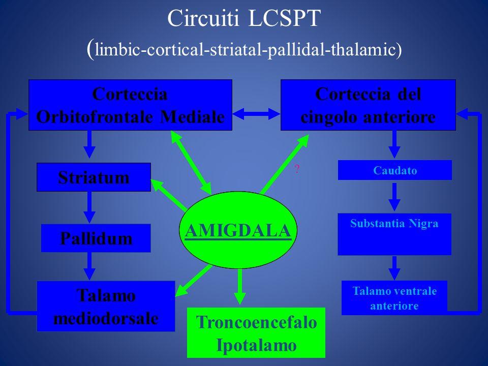 Circuiti LCSPT (limbic-cortical-striatal-pallidal-thalamic)