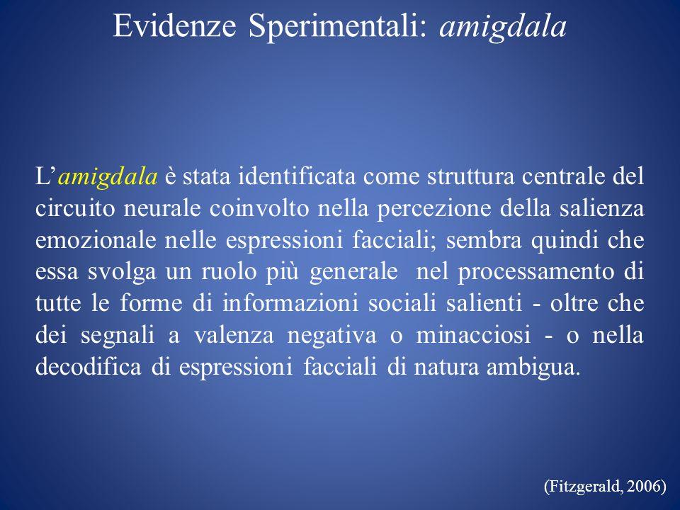 Evidenze Sperimentali: amigdala
