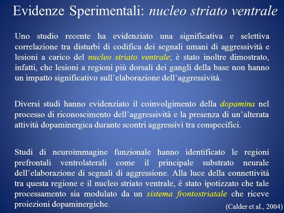 Evidenze Sperimentali: nucleo striato ventrale