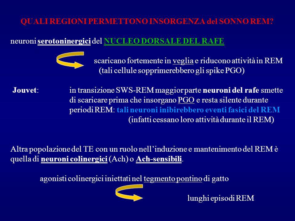 QUALI REGIONI PERMETTONO INSORGENZA del SONNO REM