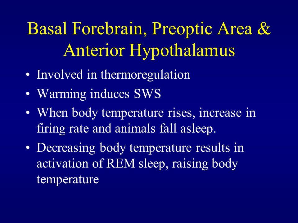 Basal Forebrain, Preoptic Area & Anterior Hypothalamus