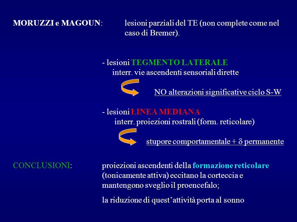 MORUZZI e MAGOUN: lesioni parziali del TE (non complete come nel