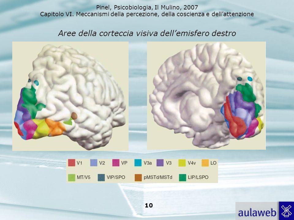 Aree della corteccia visiva dell'emisfero destro