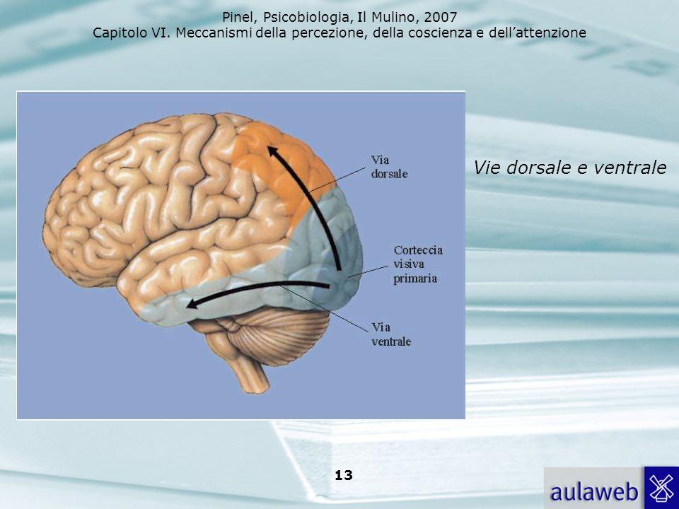 Vie dorsale e ventrale