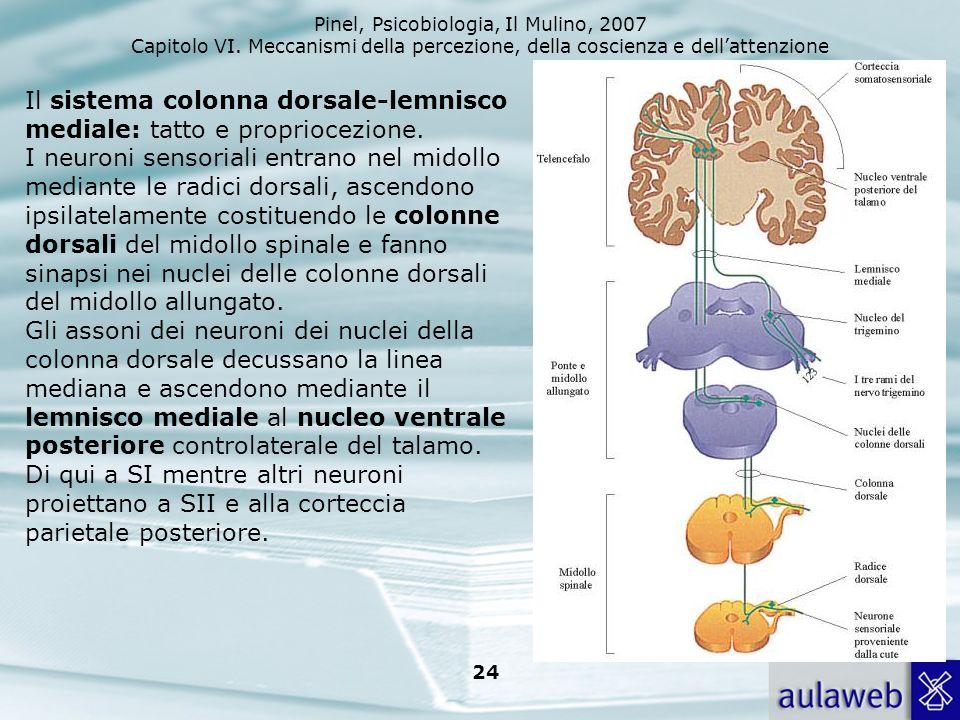 Il sistema colonna dorsale-lemnisco mediale: tatto e propriocezione