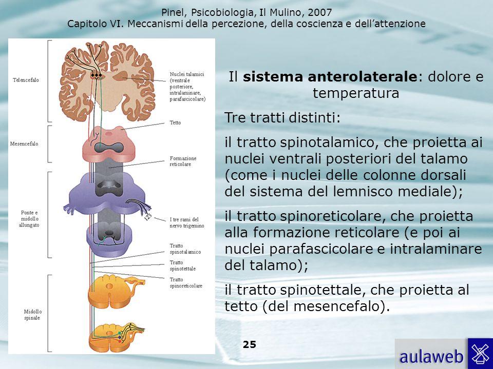 Il sistema anterolaterale: dolore e temperatura