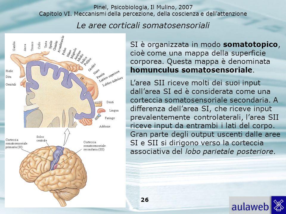Le aree corticali somatosensoriali