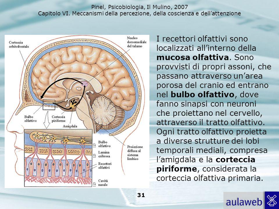 I recettori olfattivi sono localizzati all'interno della mucosa olfattiva.
