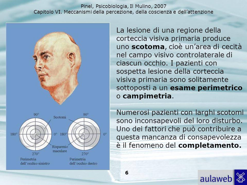 La lesione di una regione della corteccia visiva primaria produce uno scotoma, cioè un'area di cecità nel campo visivo controlaterale di ciascun occhio.