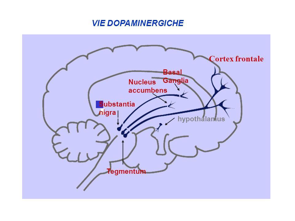 VIE DOPAMINERGICHE Cortex frontale a c b d Basal Ganglia