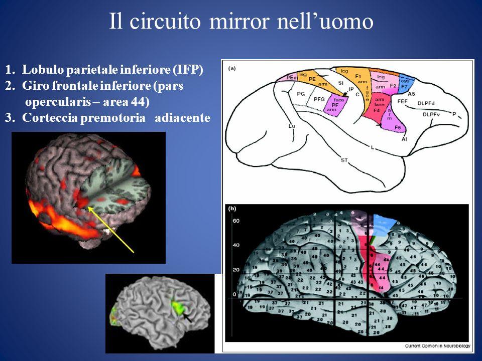 Il circuito mirror nell'uomo