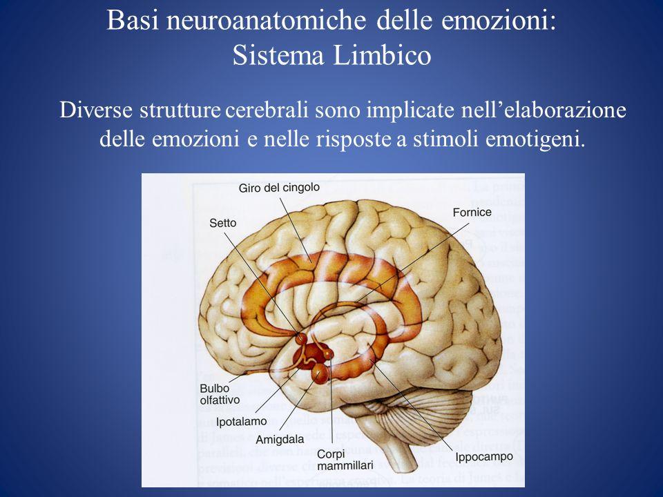 Basi neuroanatomiche delle emozioni: Sistema Limbico