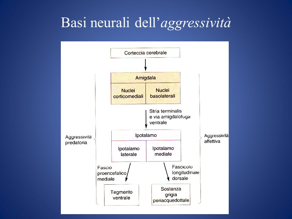 Basi neurali dell'aggressività