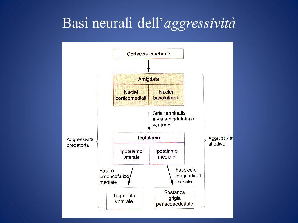 Basi neurali dell'aggressività