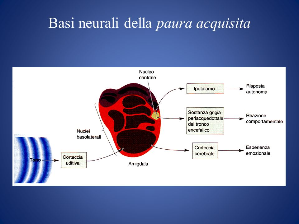 Basi neurali della paura acquisita