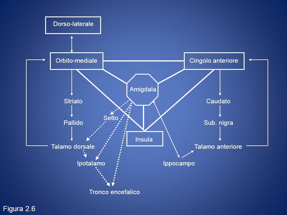 Figura 2.6 Orbito-mediale Cingolo anteriore Insula Caudato Sub. nigra