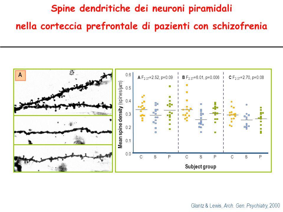 Mean spine density (spines/m)